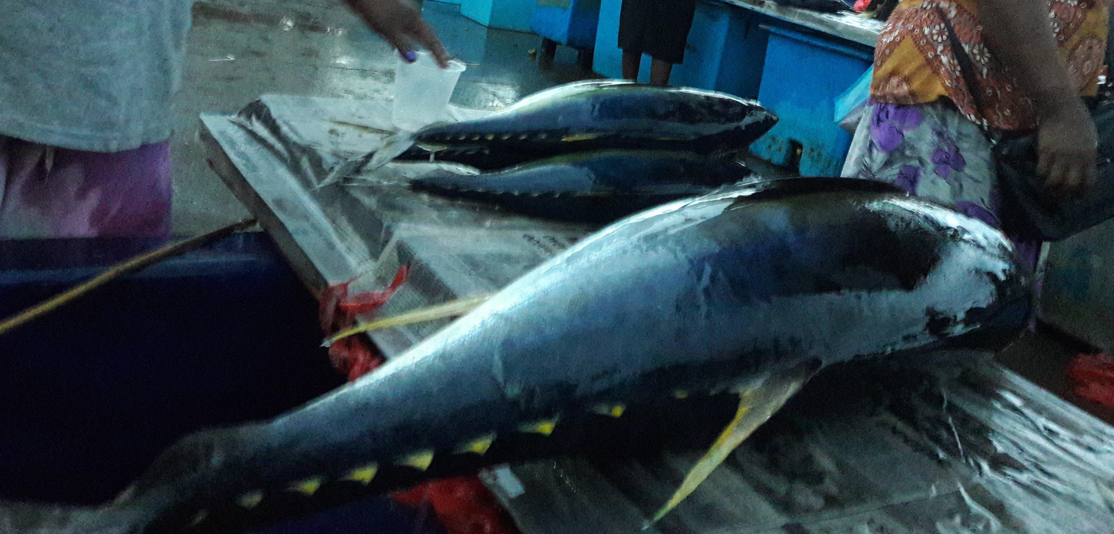 Tuna Sols