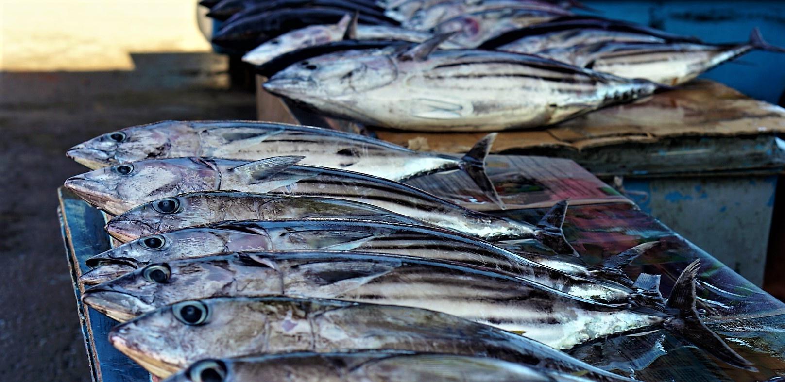 Fish in Honiara-1