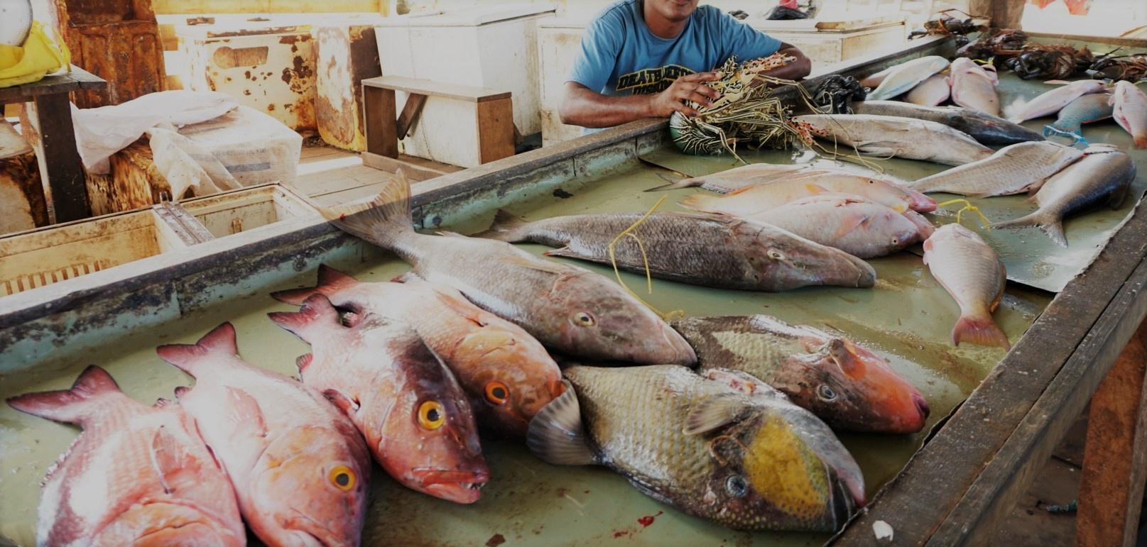 Fish licences