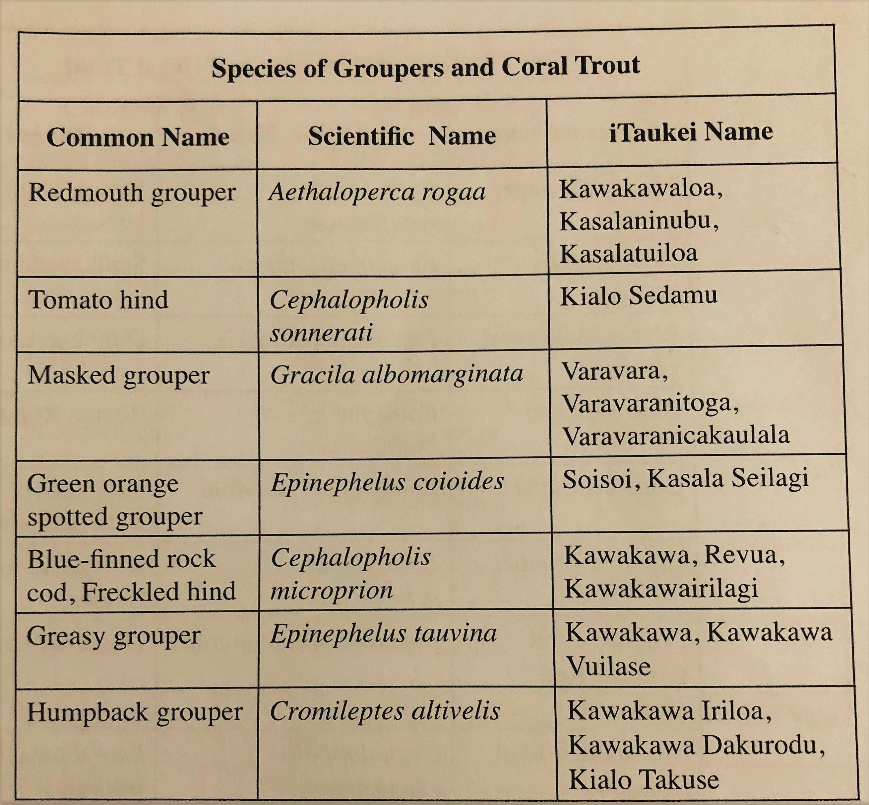Grouper 1