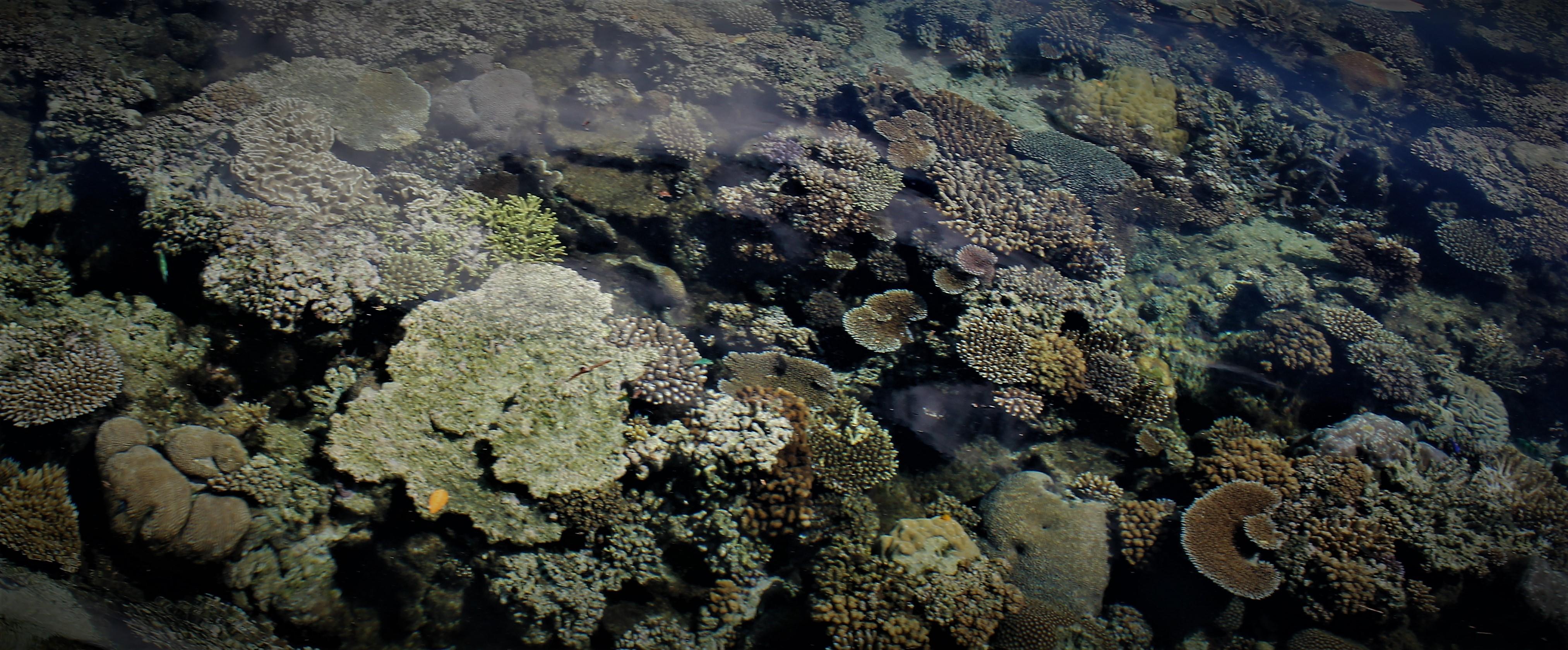 MPA coral