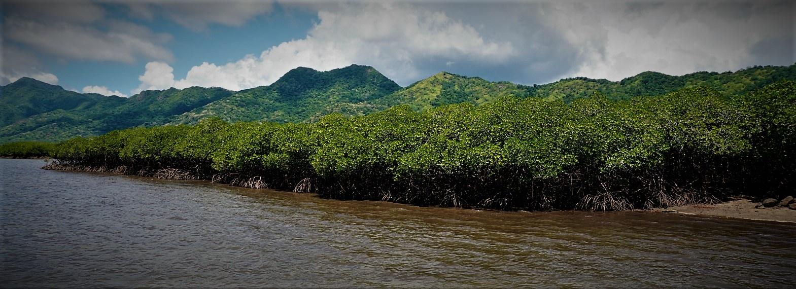 mangrove 2.jpg